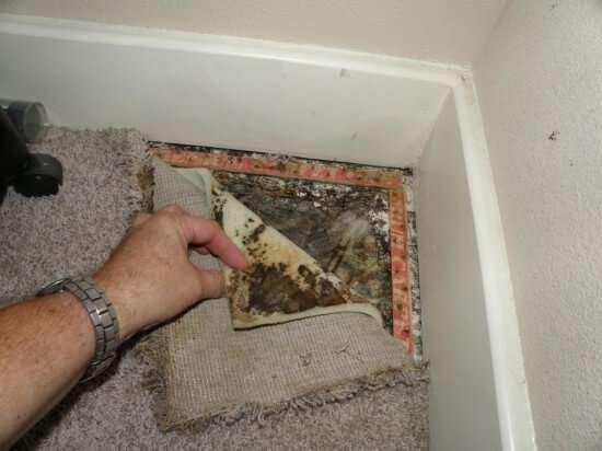 Carpet-mold-test