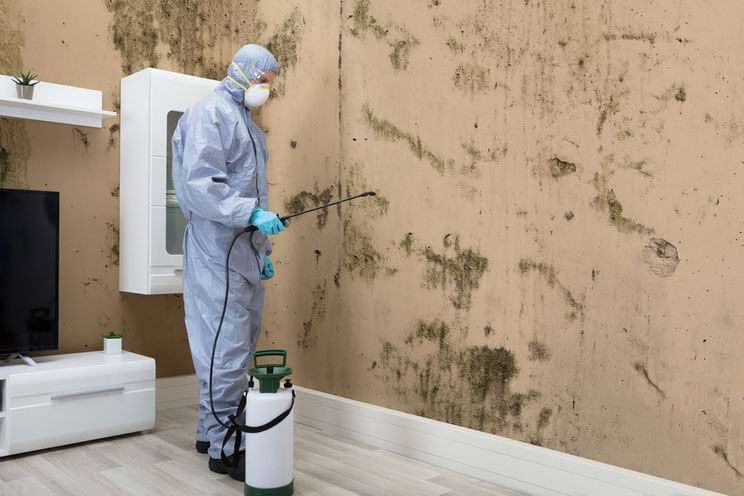mold-treatment-and-abetment