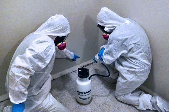 One_Stop_Mold_experts